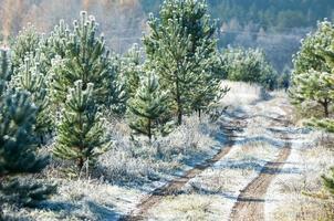 gelo autunnale sull'erba e sugli alberi
