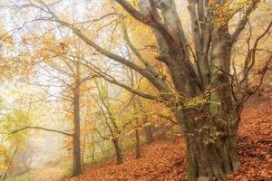 vecchio albero foto