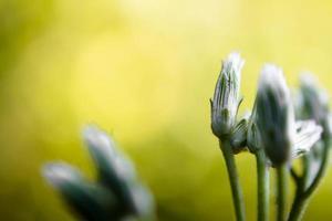 fiore di erba nella luce verde della natura foto
