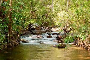 natura selvaggia nel parco nazionale di litchfield, australia foto