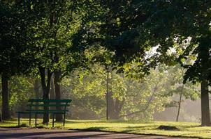 nebbia nel parco foto