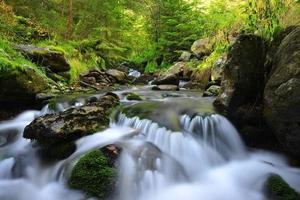 torrente di montagna