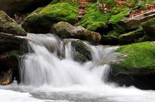 torrente di montagna foto