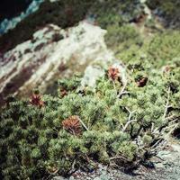 vista dei monti tatra dal sentiero escursionistico. Polonia. Europa. foto