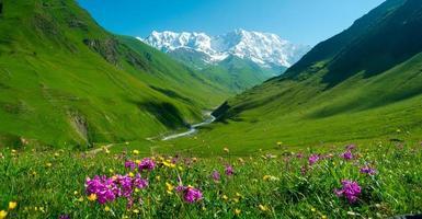 la lussureggiante valle del fiume enguri vicino a ushguli, svaneti, georgia foto