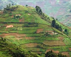 montagne virunga in africa foto