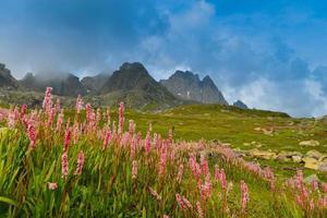 valle dei fiori foto