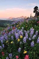 fiori di campo e catena montuosa tatoosh al tramonto