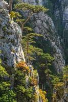 paesaggio di montagna con sagome di alberi di pino nero e cielo tempestoso