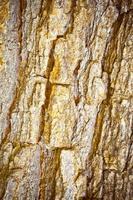 vecchia struttura ad albero foto