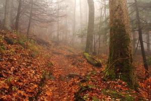 arcobaleno cade sentiero foto