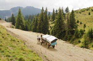 carrello a cavallo in montagna