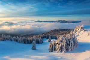 alba invernale sopra le nuvole con abete pieno di neve