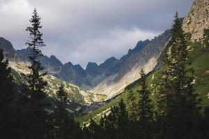 vista panoramica di alte montagne e pini foto