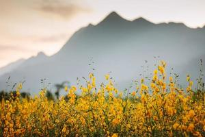 canapa fiorita con la montagna.