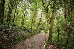 foresta pluviale sul monte kilimanjaro