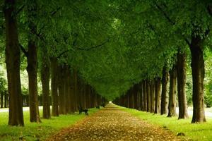 l'autunno sta arrivando foto