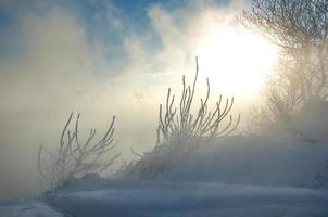 alberi coperti di brina foto