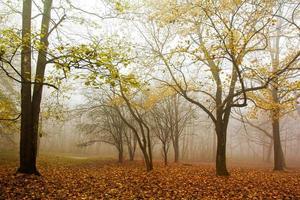 nebbia in forset foto