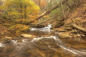 caduta delle foglie in montagna