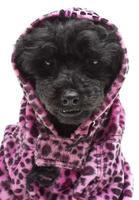 avvolto in stampa animalier rosa foto