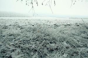erba congelata e brina a terra in inverno foto