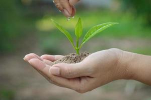 piantine di irrigazione a mano. foto