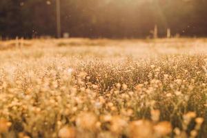 campi di fiori a tulsa, oklahoma