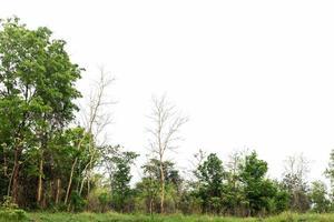 foresta e cielo bianco foto