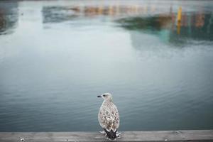 uccello in piedi sul cemento con lo sfondo del fiume