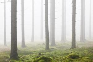 foresta con nebbia mattutina