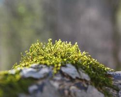 vecchia corteccia d'albero con muschio su di esso