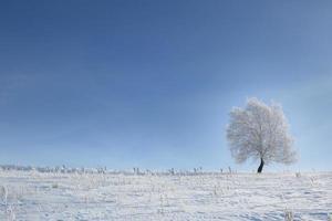 albero in mezzo alla neve in un campo invernale