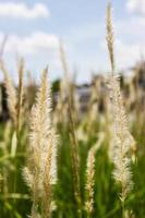fiore erba impatto luce solare