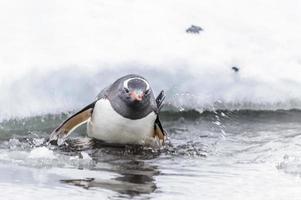 i pinguini giocano sulla roccia di ghiaccio
