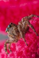 ragno che salta
