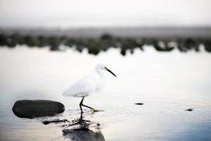 uccello acquatico a piedi
