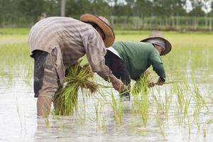 agricoltori che piantano