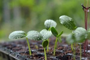piante in crescita