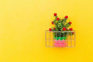 piante ornamentali foto