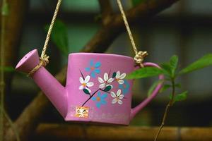 innaffiare le piante. o piante coltivate in vaso
