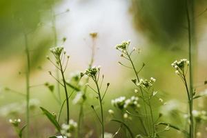 piante da campo