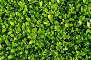 sfondo di piante foto