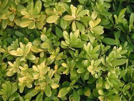 pianta verde foto