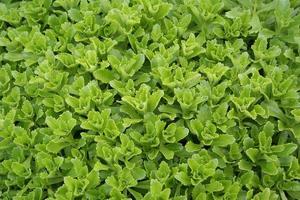 sfondo della pianta # 4