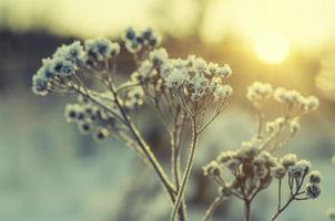 pianta di prato congelato