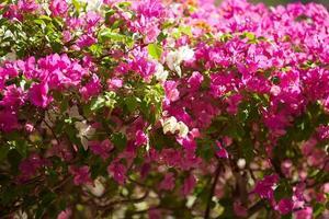 piante fiorite in vietnam