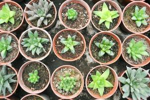 piante ornamentali in miniatura foto