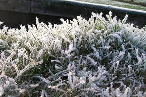 gelo sulla pianta a terra foto