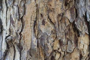 vecchia struttura di legno foto